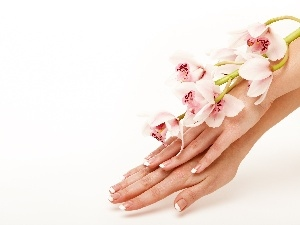 Womens, orchids, hands