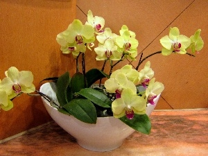 orchids, Yellow