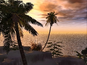 Palms, Ocean, west, tropic, sun