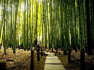 bamboo, Park, exotic