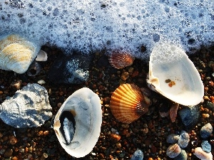 Pebble, Shells