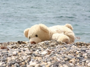 pebbles, Plush, White, water, teddy bear