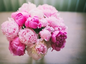 Peonies, Pink, bouquet, Flowers