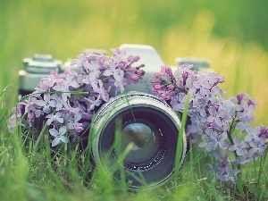 photographic, Camera, Flowers, lilac