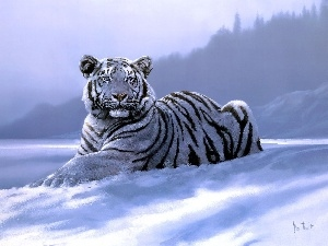 picture, tiger, winter, White