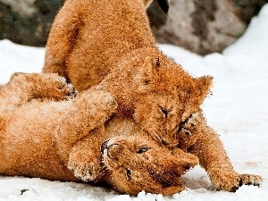 play, lions, Two cars, snow, young