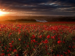 poppy, rays, west, field, sun