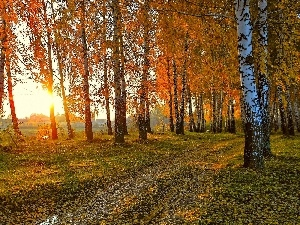 autumn, rays, River, forest, sun, birch, Leaf