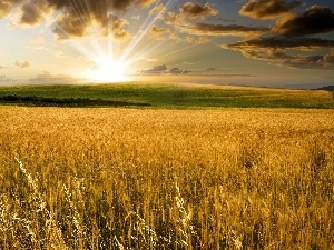 rays of the Sun, clouds, corn