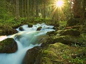 River, rays of the Sun, waterfall, forest