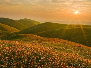 rays, dandelions, Mountains, sun, Meadow