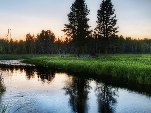 reflection, River, forest, Meadow