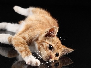 kitten, reflection, ginger