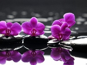 water, reflection, orchids