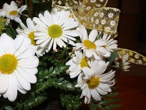 daisy, ribbon, White