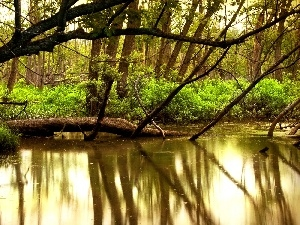 River, Bush, forest, reflection, green ones
