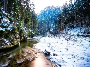 River, forest, trees, winter, viewes