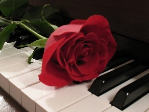 rose, Piano, red hot