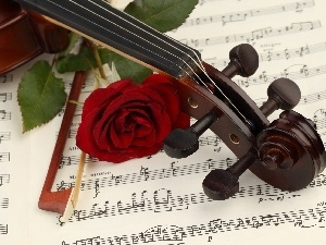rose, Tunes, violin, bow