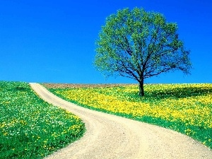 sapling, lonely, Spring, Path