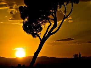 savanna, trees, west, sun