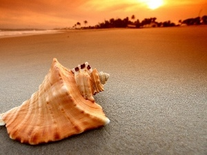Beaches, sea, shell
