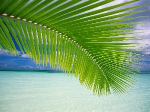Palms, sea, leaf