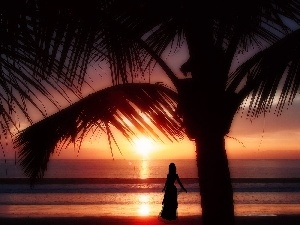 sea, Palm, west, Women, sun