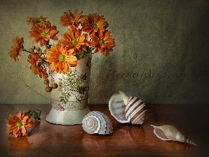 Shells, Vase, composition, daisy