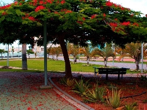 Sidewalks, viewes, Palms, Park, Bench, trees