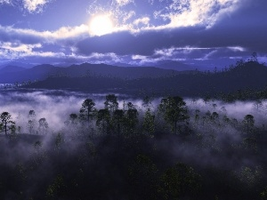 Sky, cloudy, forest, Fog