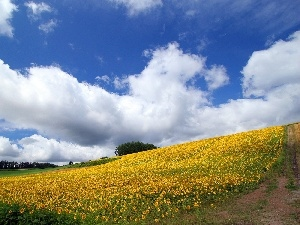 Sky, Way, Field, Nice sunflowers