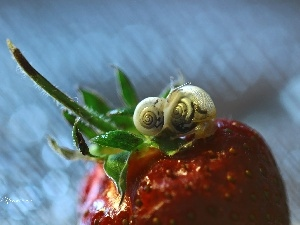 Snails, Strawberry, Two cars