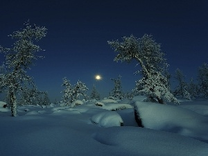 snow, viewes, moon, trees