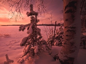 pine, snow, winter, trees, Great Sunsets, viewes