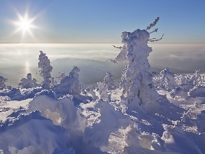 snow, Mountains, trees, sun, viewes
