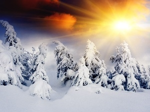 snow, Spruces, rays, winter, sun