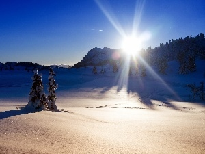 snow, trees, viewes, rays, winter, sun