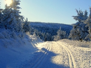 snow, Way, winter, forest
