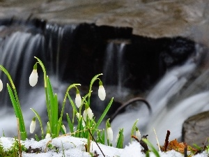 snow, snowdrops, waterfall