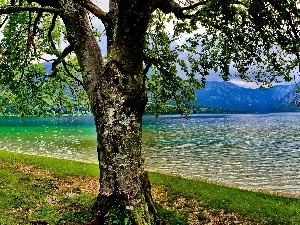 Spring, trees, lake, Mountains
