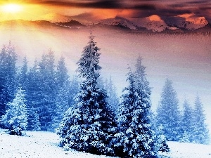 Spruces, sun, Mountains, winter, rays