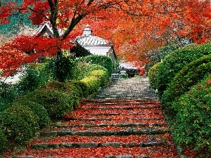Stairs, trees, house, Leaf, Japan