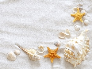 Shells, starfish, Sand