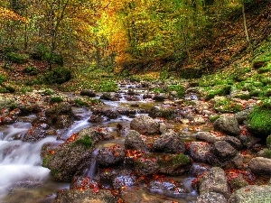 Stones, brook, autumn, forest