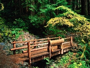 Stones, bridges, forest, wooden