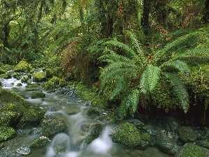 stream, fern, trees, Stones, viewes