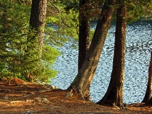 forest, summer, lake