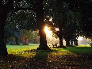 sun, west, trees, Bench, viewes