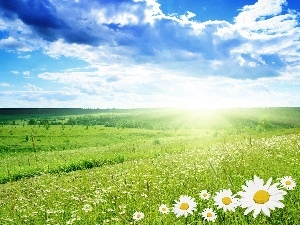 sun, clouds, rays, Meadow, Flowers, woods